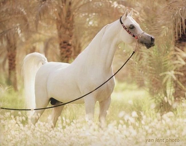 world's most beautiful horses   If you enjoyed this article, Get email updates (It's Free)