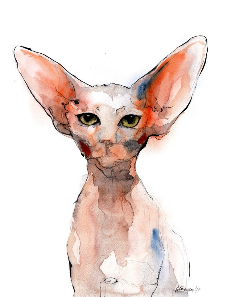 Sphynx cat picture - digital watercolor print A4, A3, 8x11, 11x16. Animal art. Unique gift, for cat lovers, watercolour wall art for home. by AlisaAdamsoneArt on Etsy