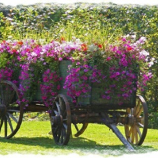 If Anybody Needs A Wagon Load Of Flowers I Know A Good Place ;