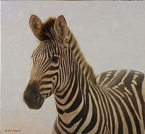 Zebra Portrait de Peter Stewart ~ huile x