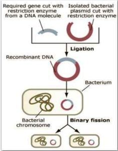 STEPS OF RECOMBINANT DNA TECHNOLOGY