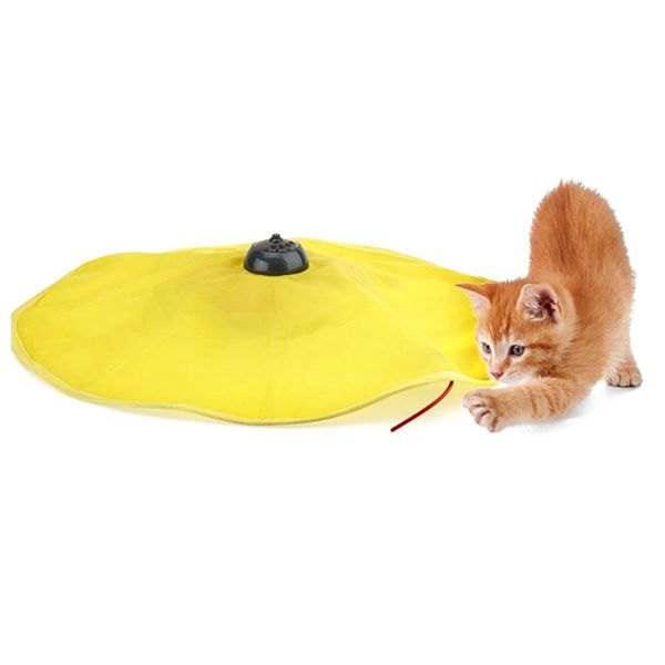 Cat's Meow: Peek-A-Book Motorized Cat Toy from eFizzle