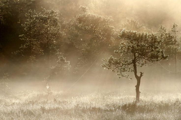 Puu kuin veistos.