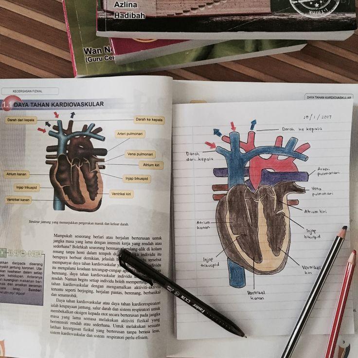 #heart #biology #studyblr