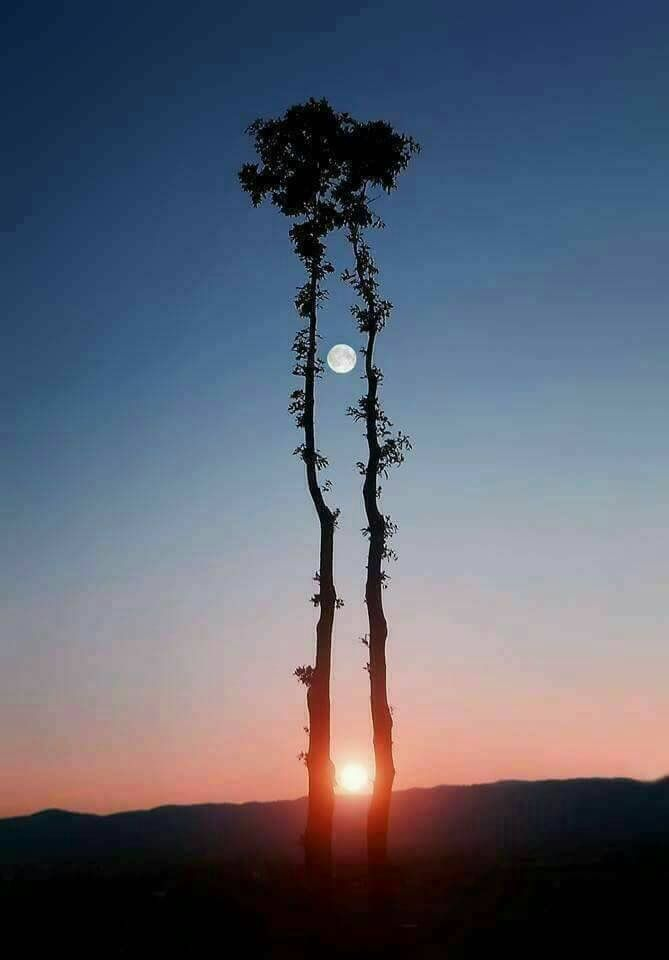 A German photographer had fixed 16cameras to take this shot for which he had waited for 62 days. Touch the screen to see the sun & the moon together.  This can be seen again only in 2035.