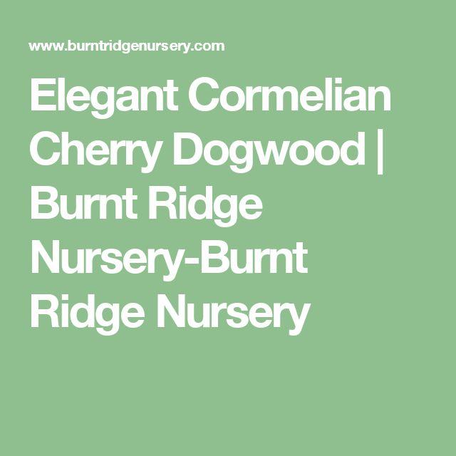 Elegant Cormelian Cherry Dogwood | Burnt Ridge Nursery-Burnt Ridge Nursery
