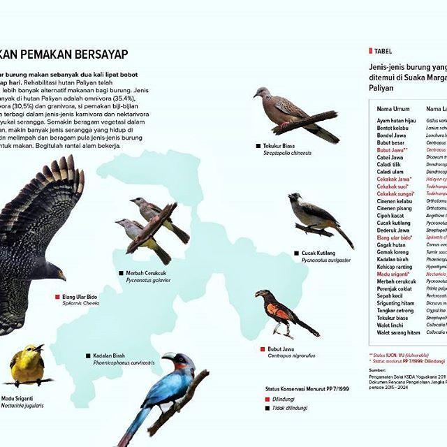 PASUKAN PEMAKAN BERSAYAP –  Sebagian besar burung makan sebanyak dua kali lipat bobot tubuhnya, setiap hari. Rehabilitasi hutan Paliyan telah menumbuhkan lebih banyak alternatif makanan bagi burung. Jenis pemakan terbanyak di hutan Paliyan adalah omnivora (35.4%), disusul insektivora (30,5%) dan granivora, si pemakan biji-bijian (18,4%). Sisanya terbagi dalam jenis-jenis karnivora dan nektarivora yang juga menyukai serangga. Semakin beragam vegetasi dalam komunitas hutan, makin banyak jenis…