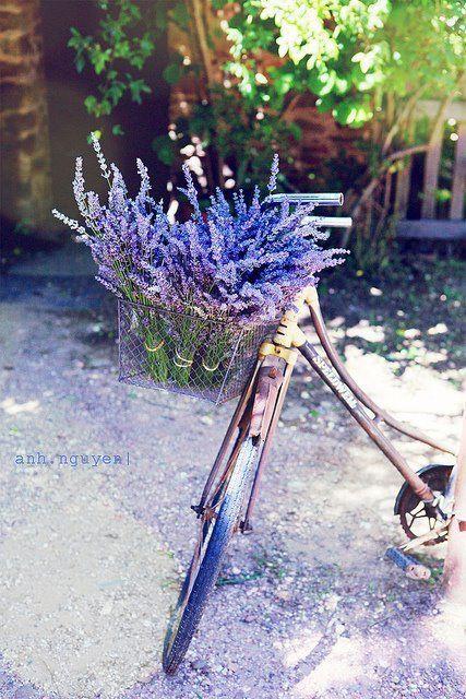 Lavender & bike