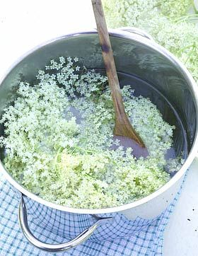 How to make Elderflower Cordial! This sounds very interesting... Supposedly it will taste of 'green almonds'.