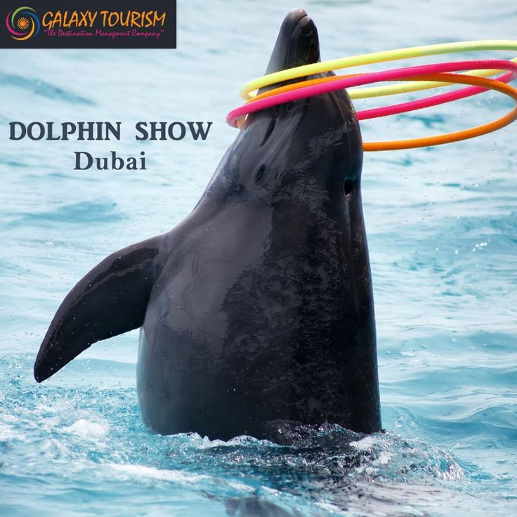 Enjoy Dolphin show and chance to swim with Dolphins in Dubai at best rate with ‪#‎GalaxyTourism‬ Read More:- http://goo.gl/N48Ajn