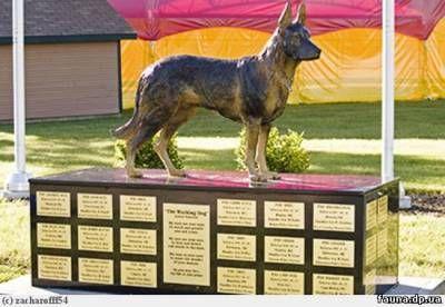 Оттава, Канада_32 -ум полицейским собакам посвящается  Бронзовая немецкая овчарка в натуральную величину гордо возвышается на постаменте, это сука Альта! --знаменитая статуя скульптора Дайан М. Андерсон , открытие этого памятника 32 полицейским собакам, погибшим при исполнении служебных обязанностей с 1965 года, был 20 июня 2007 года в Оттаве, Канада, Канадским Кинологическим Центром подготовки Служебных Собак.