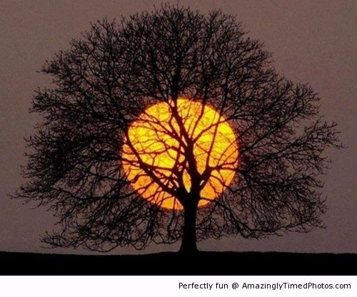 Amazing sunset shadowed with a tree | Amazingly Timed Photos