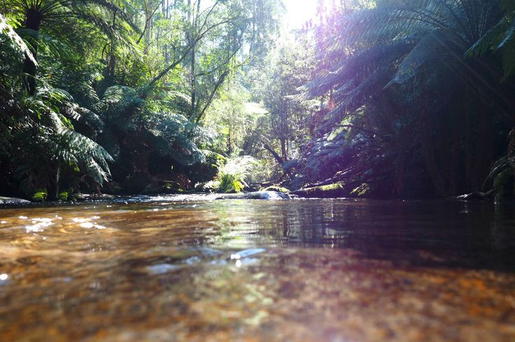 Exploring the pools above Amphitheatre Falls | Noojee | Gippsland