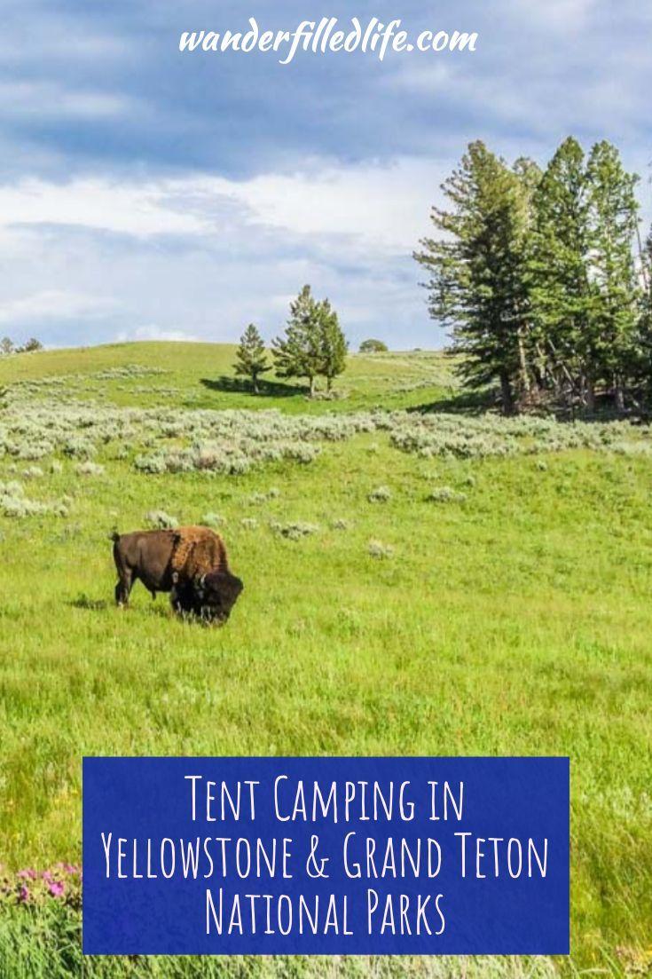 Tente de camping à Yellowstone et Grand Teton   – National Parks & Nature