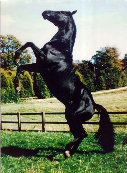 Docs Keepin Time, who played Black Beauty in the 1994 movie and the ill-fated Gulliver in The Horse Whisperer.