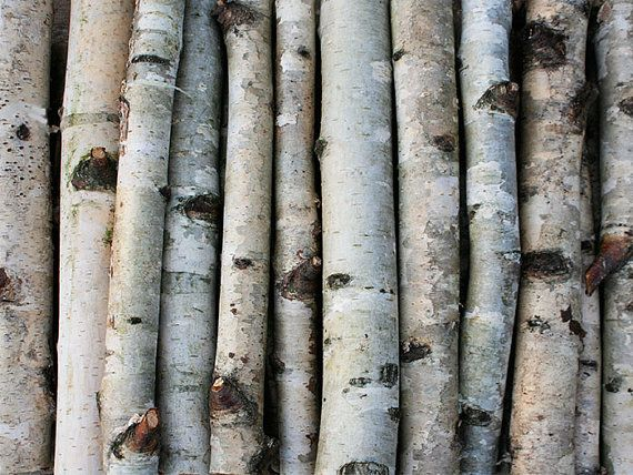 White birch branches wood logs sticks