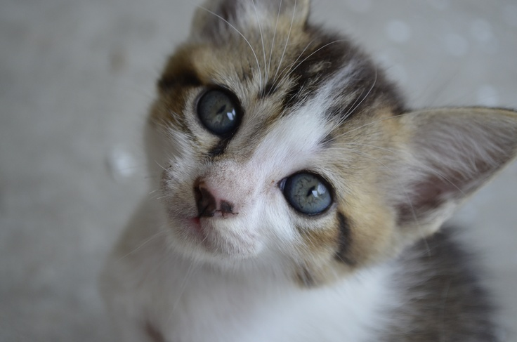 new pic of my kitten...she's a month old now