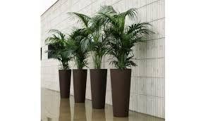 R sultat de recherche d 39 images pour grand pot de fleur interieur design deco florale Pot design pour plante interieur