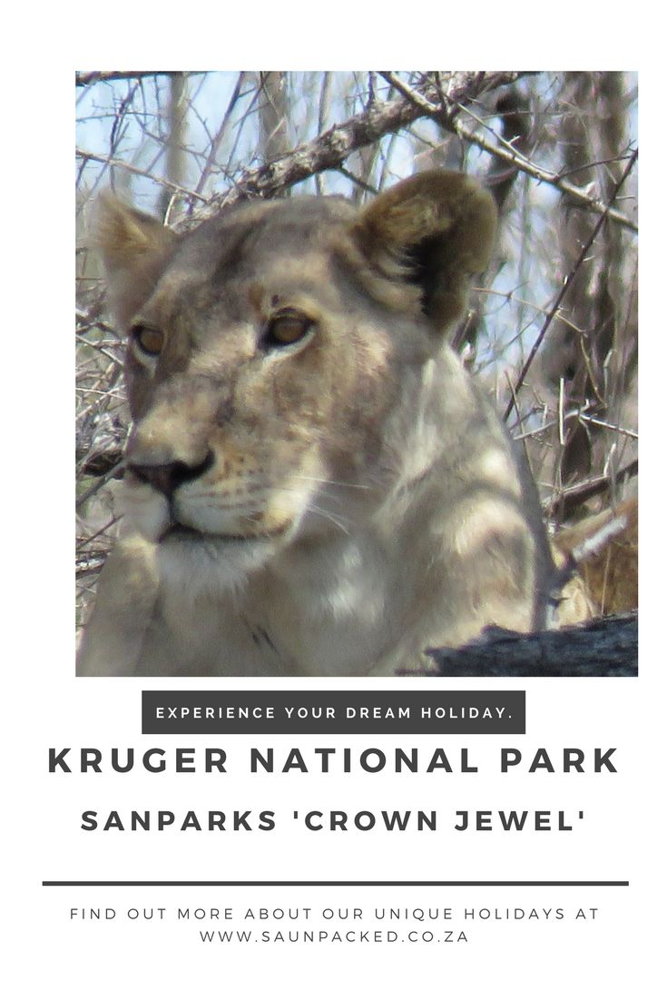South Africa's most famous attraction, Kruger National Park is a 'must see' destination. But there's more than one way to experience the wonderful animals.