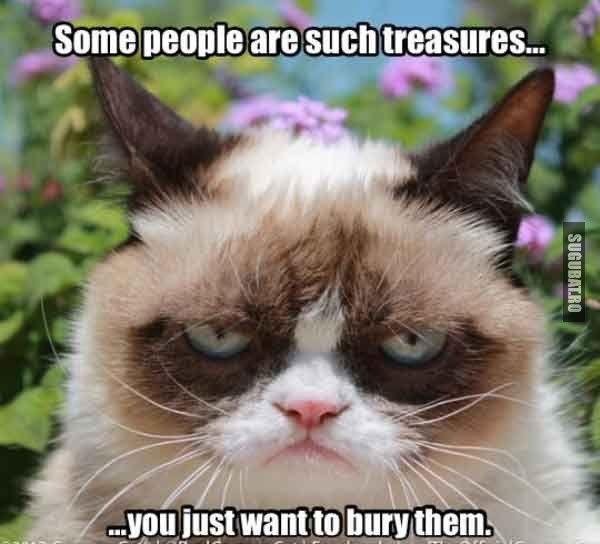 Grumpy Cat: Unii oameni sunt precum comorile, iti vine sa ii ingropi!