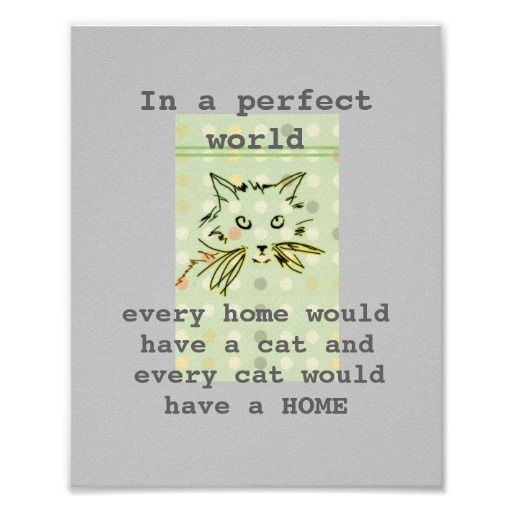 every cat would have a home in a perfect world