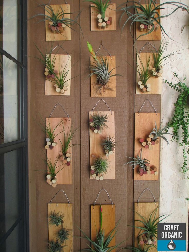 Tillandsia displayed on individual plaques featuring a
