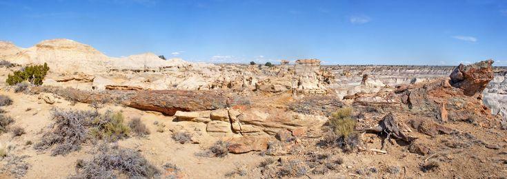 De-Na-Zin Wilderness, New Mexico / Hundred foot long petrified tree