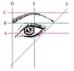 Diseño de ceja; Hay tres puntos fundamentales: la línea D que va desde la base de la nariz hasta la ceja, es el límite en donde debería comenzar la ceja. El extremo externo del iris (línea E) nos daría referencia del ángulo más alto que debería alcanzar. El largo ideal de la ceja está dando en referencia por la línea F (imagen).