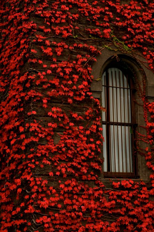 A window amidst the leaves