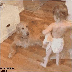 Tumblr: puppypu: More Dog Gifs