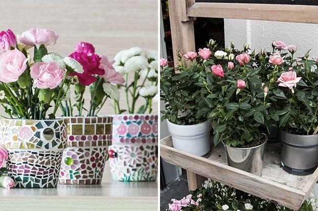 pequenos espaços Vasos coloridos para flores Como cuidar de rosas