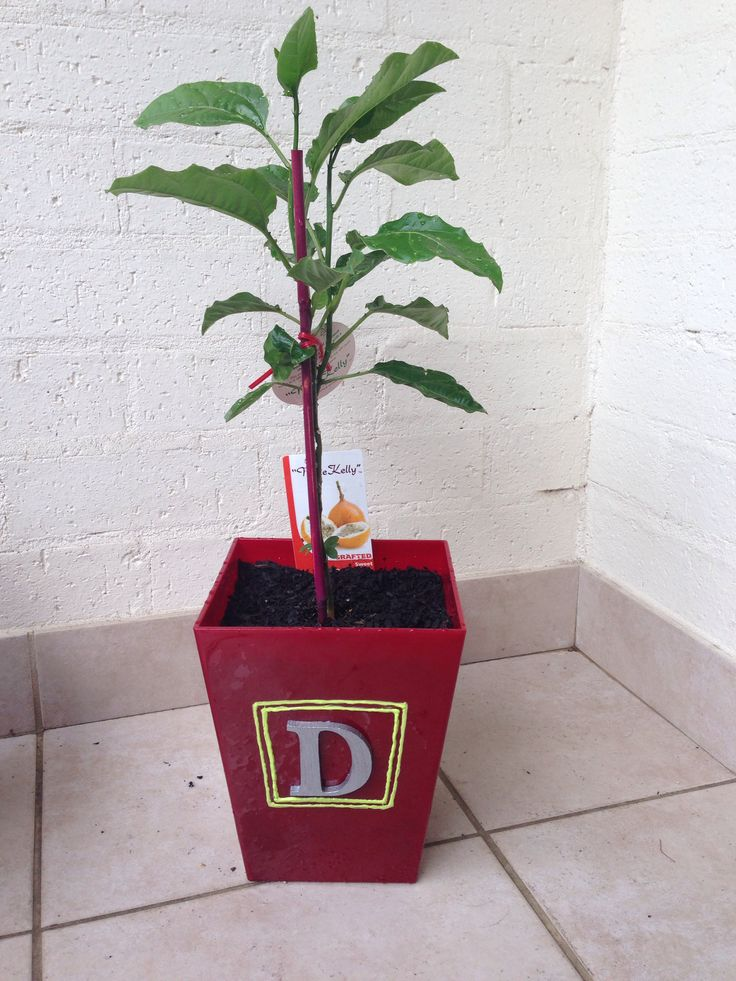 My boyfriend and I made a pot plant for his mum for her birthday.