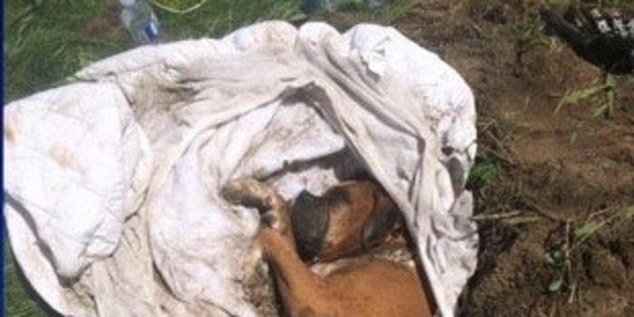 Demand Maximum Sentence for Animal Abuser Who Beat a Dog and Buried It Alive in the Monteregie, Quebec