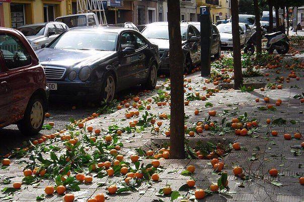 Апельсины созрели. Севилья, Испания.