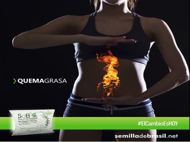 La Semilla de Brasil es un adelgazante completamente natural, es un potente quemador de grasa corporal también conocida como semilla de brasil original