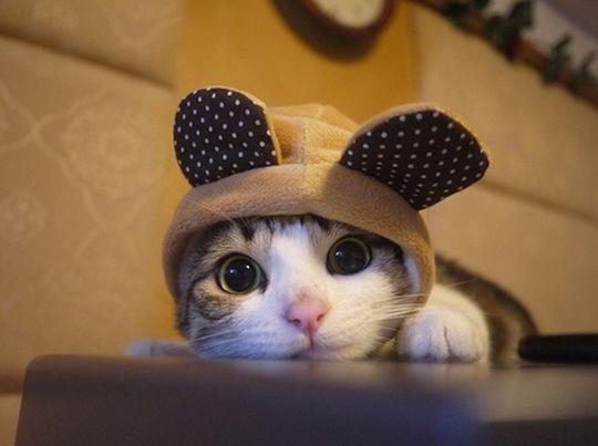 http://lista10.org/humor/10-fotos-de-animais-fofinhos-para-aumentar-sua-produtividade-no-trabalho/