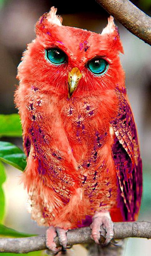 Wow this owl is beautiful.