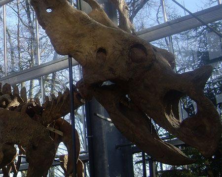 Dinomuseum / Oertijdmuseum in Boxtel
