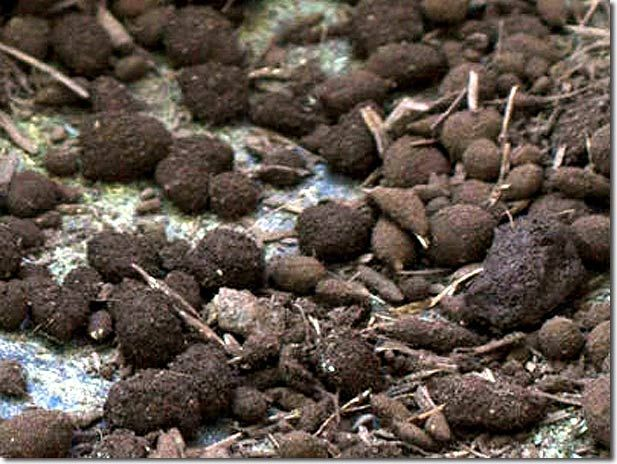 Making Seedballs: An Ancient Method of No-till Agriculture