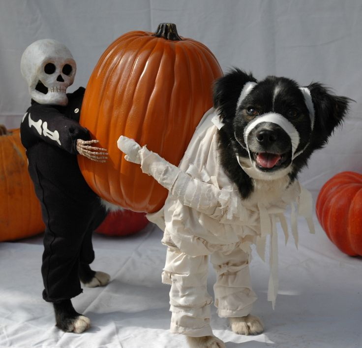 Ah, the old two people as one dog Halloween costume! We love this clever high-quality Halloween costume for dogs.