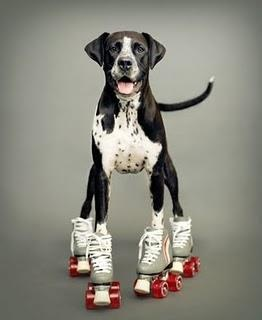 anyone, or any dog, can skate.