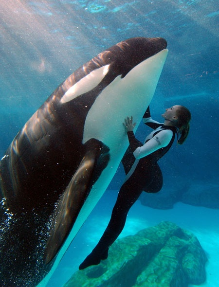 The only time an Orca is reported violent with humans is in captivity....not in the wild!