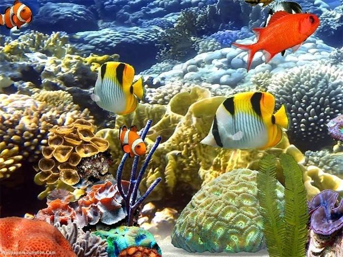 Printable Fish Tank Background Inspirational 3d Fish Template Dancarlyle In 2020 Aquarium Backgrounds Tank Wallpaper Aquarium Live Wallpaper