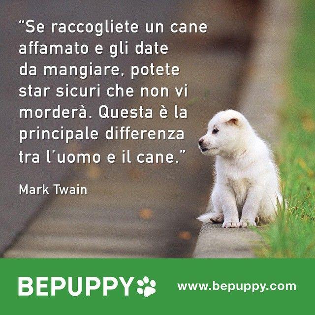 """""""Vi aspettiamo su www.bepuppy.com #cani #jackrussell #carlino #labrador #goldenretriever #alano #miglioreamico #chihuahua #pitbull #bulldog #maltese…"""""""
