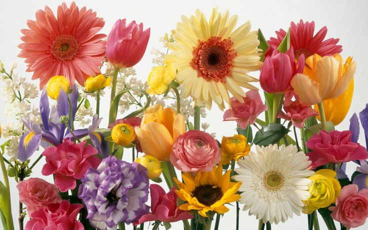 spring screensavers and backgrounds free