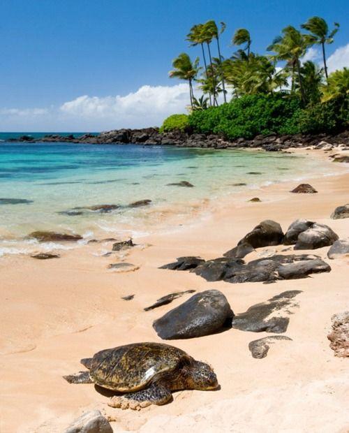 I've been here!   Turtle Beach...Oahu North Shore