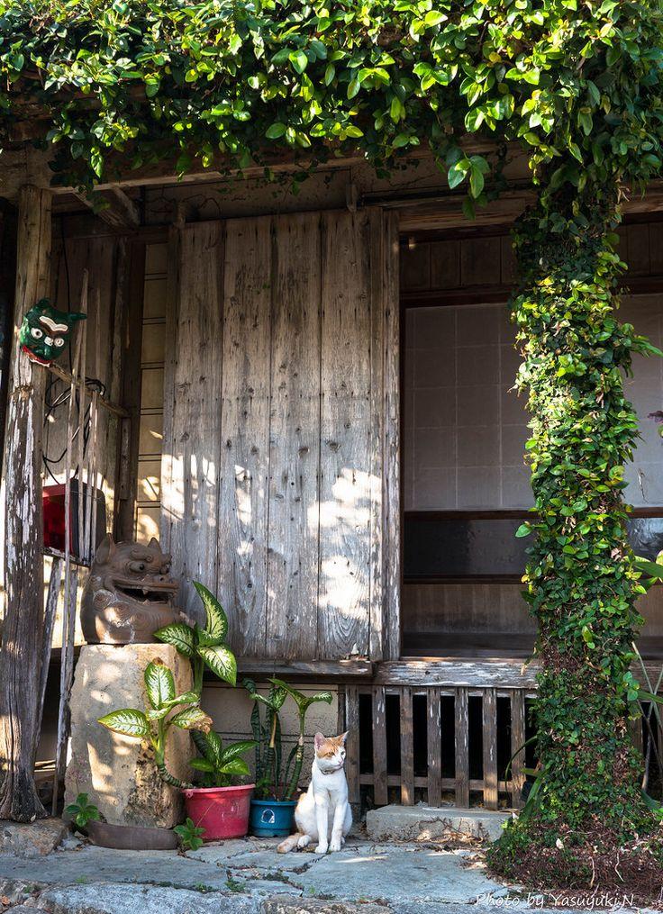 778:  Okinawa Cat (by karukan21)
