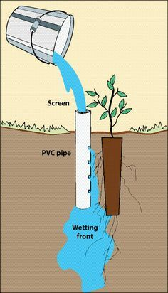 pvc pipe projects | Figure 10.136 - Deep pot irrigation uses an open-ended PVC pipe placed ...