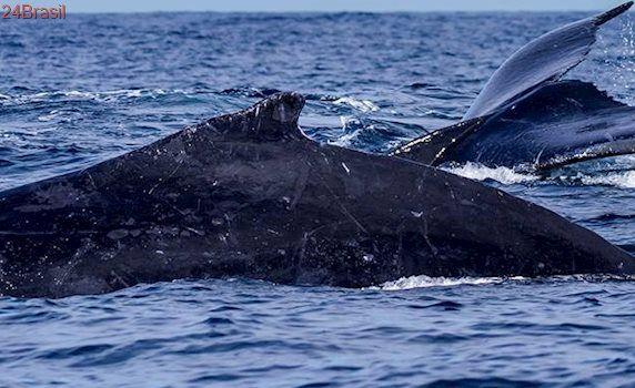 De graça! Curso de capacitação para turismo de observação de baleias em Vitória