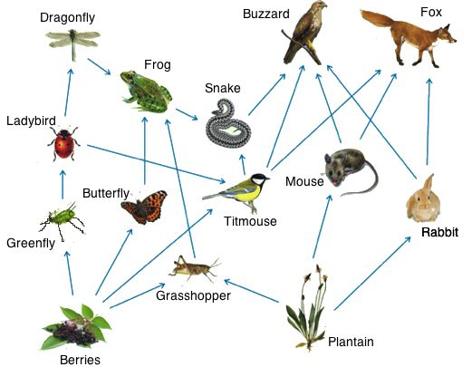 Image Gallery land food chains labeled